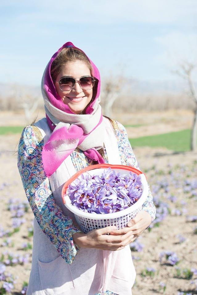 Ariana Bundy picks wild saffron crocus
